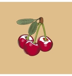 Cherry in vintage style Colored vector image