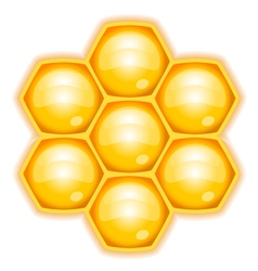 honeycomb vector image vector image