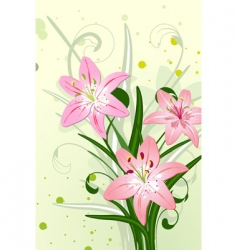 lily flowers vector image vector image