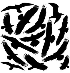 Predator silhouette vector