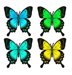 Set of four beautiful butterfly insect isolated vector