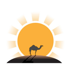 Silhouette of camel on sunset in desert vector