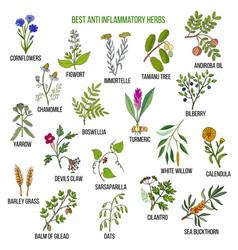 Best anti-inflammatory herbs vector