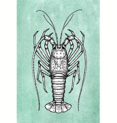 Ink sketch of spiny lobster vector