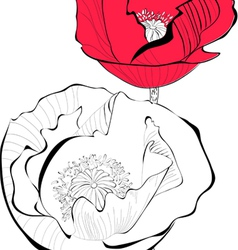 Stylized Poppy flower vector image vector image