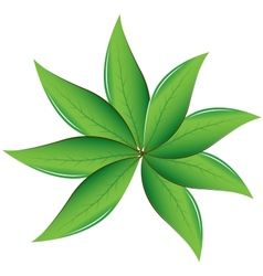 Tea leaves vector