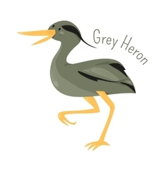 Grey heron isolated on white vector image