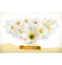 Bouquet of white flowers vector