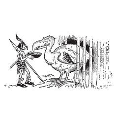 animal alphabet d dodo vintage vector image vector image