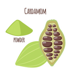 Cardamom spice for food in cartoon flat style vector