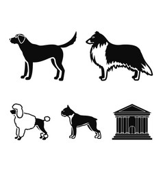 collie labrador boxer poodle dog breeds set vector image