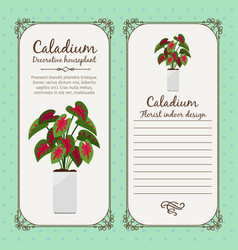 Vintage label with caladium plant vector