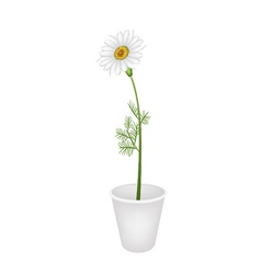 A lovely fresh chamomile in flower pot vector