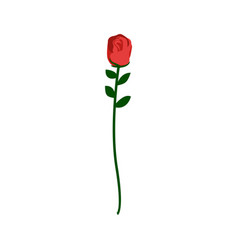 Red rose isolated beautiful flower on white vector