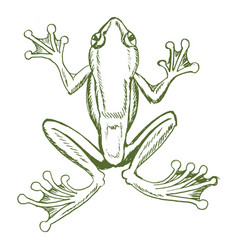 Tropical tree frog vector