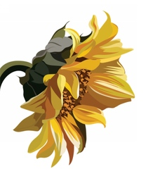 Watercolor vintage sunflower vector