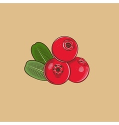 Cowberry in vintage style Colored vector image
