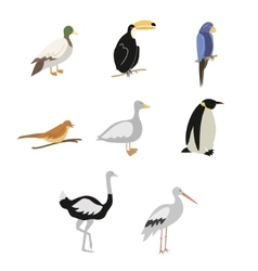 Cartoon birds set vector