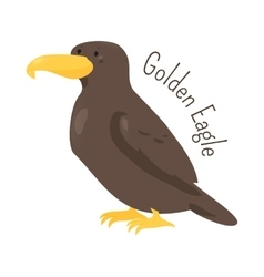 Golden eagle isolated on white vector