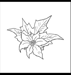 Poinsettia flower hand drawn icon outline sketch vector