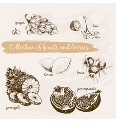 Collection of fruits and berries vector image vector image