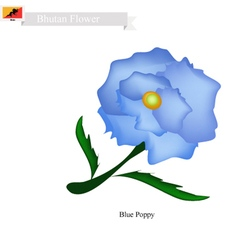 Blue poppies the national flower of bhutan vector