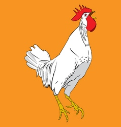 rooster chicken vector image vector image