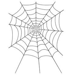 spidr web 01 vector image vector image
