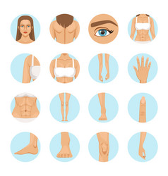 woman body parts human anatomy vector image vector image