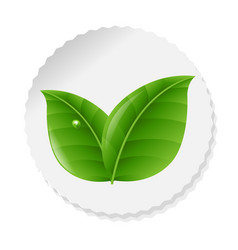 nature label with leaves vector image