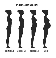 Pregnancy Stages and Birth Infographics Silhouette vector image vector image