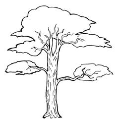 acacia vector image