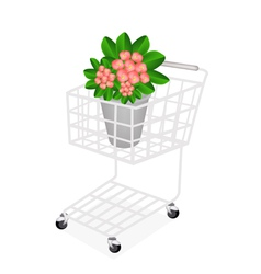 Fresh crown of thorns in a shopping cart vector