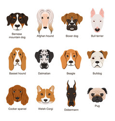 Different dogs set isolate vector
