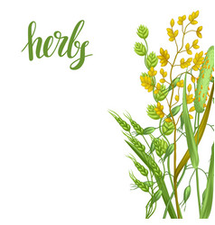 Background with herbs and cereal grass floral vector