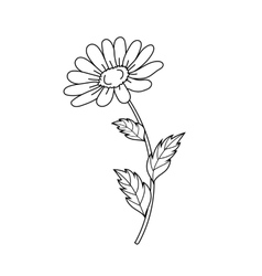 Beautiful daisiy isolated on a white background vector image