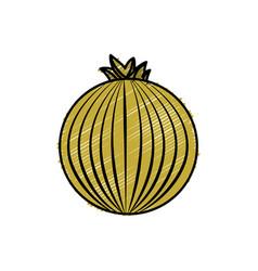 Fresh onion organ vegetable food vector