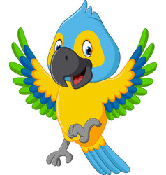 cute macaw cartoon vector image vector image