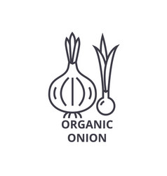 organic onion line icon outline sign linear vector image