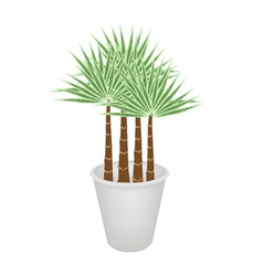 Palm Trees in A Flower Pot vector image