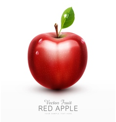 Red apple with green leaf isolated vector