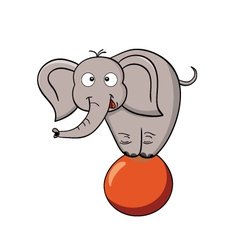 Cartoon elephant on a ball vector image