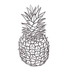 Hand drawn of pineapple vector