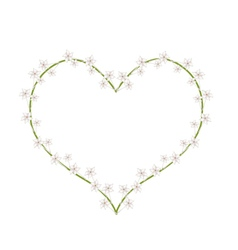 White Madagascar Jasmine Flowers in A Heart Shape vector image vector image