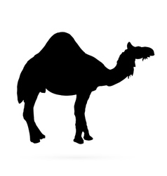 camel silhouettes on the white background vector image