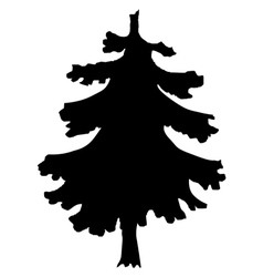 spruce vector image