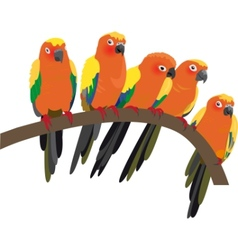 Bright sun conure parrots on white vector