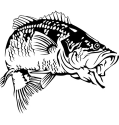 Black Bass vector image