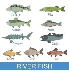River fish identification slate with names vector