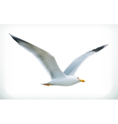 Sea gull icon vector image